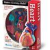 Комплекти таблиць Корисні та шкідливі звички - Серце – анатомія людини