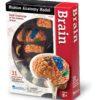 Комплекти таблиць Безпека життєдіяльності - Мозок – анатомія людини